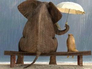 elephant thinkstock