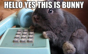 the list landlines bunny